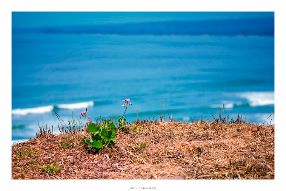 Wildflowers overlooking the ocean, California, Flowers & Plants, foliage, Nature, dry grass, colorful,
