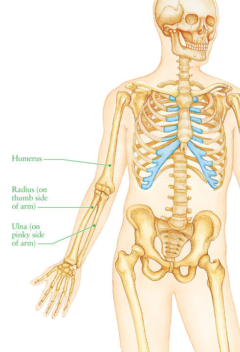 Human Anatomy for the Artist: February 2012