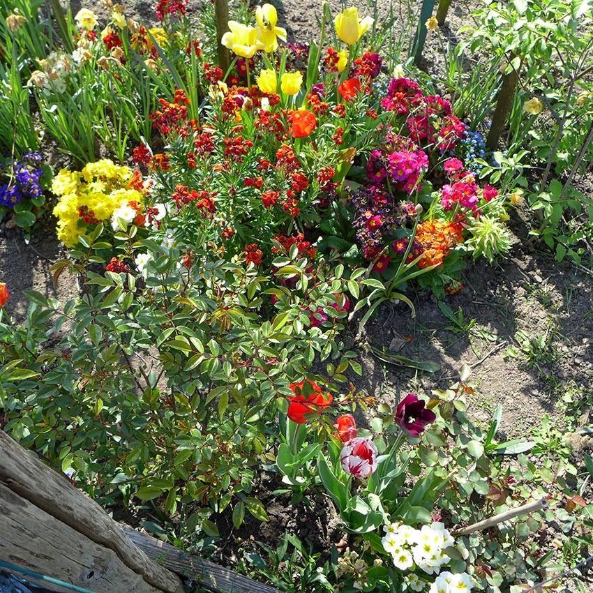 rencontre jardin et nature fontenay le comte Sète