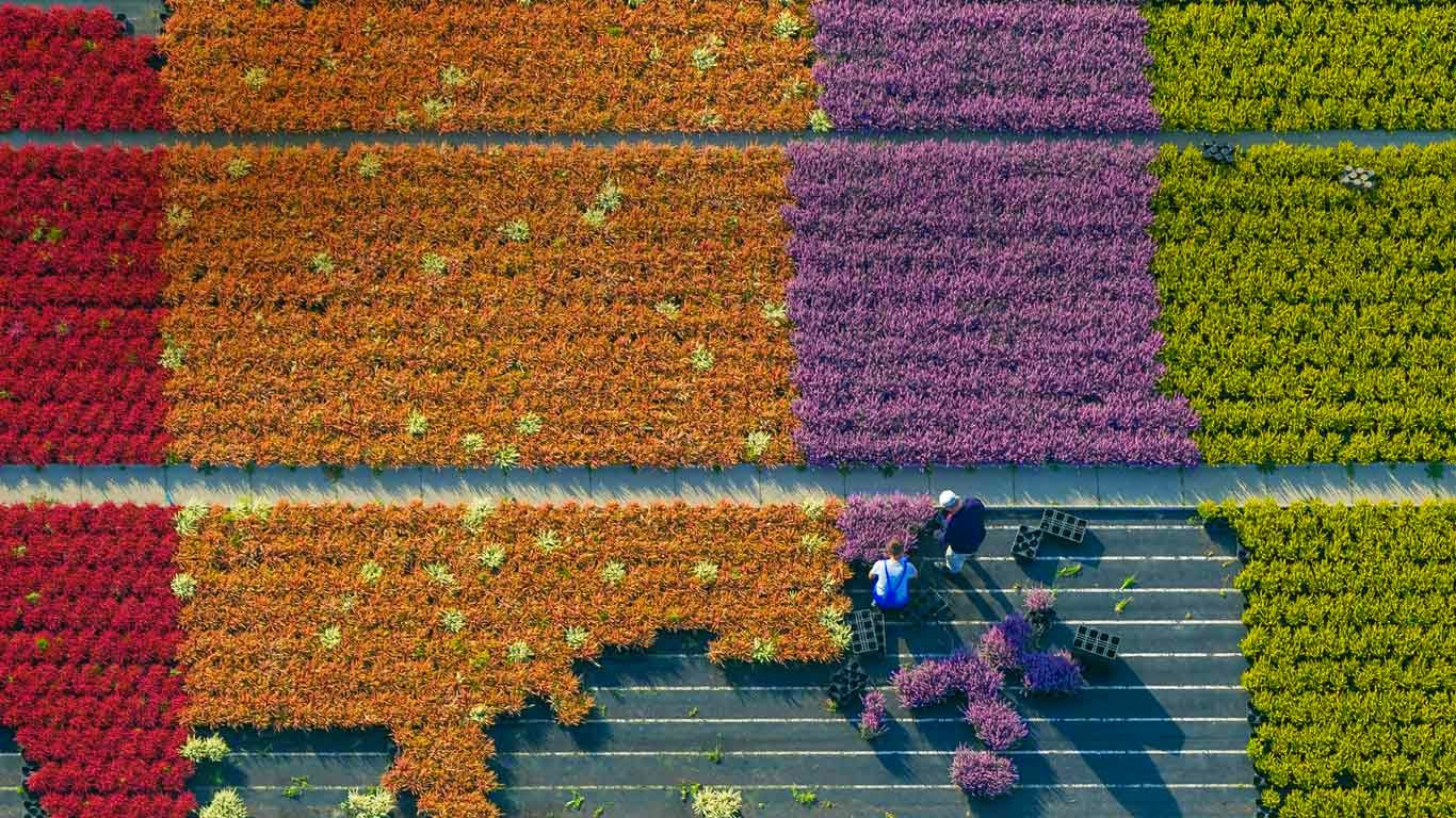 Aerial view of a flower farm, North Rhine-Westphalia, Germany (© Hans Blossey/Corbis) 150