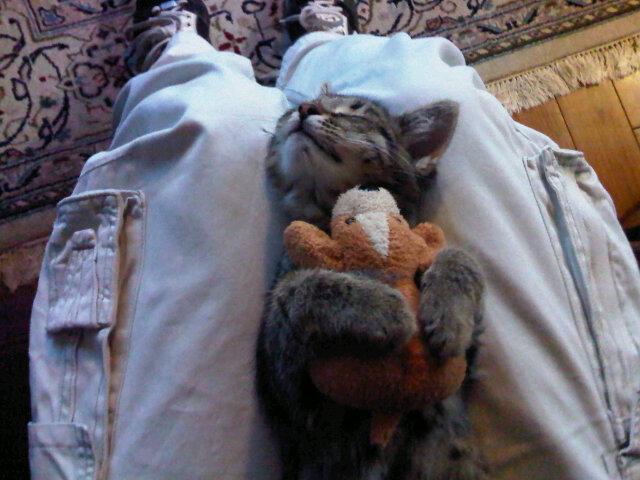 Балдеет вместе с игрушкой на ногах - прикольные коты 22-11-12