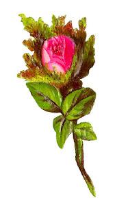 rose download image stock