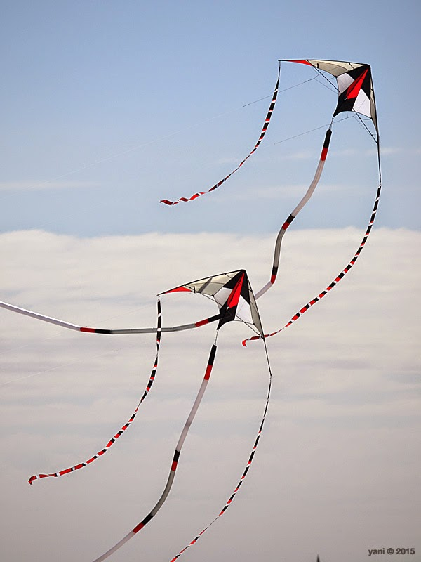 dancing kite pair