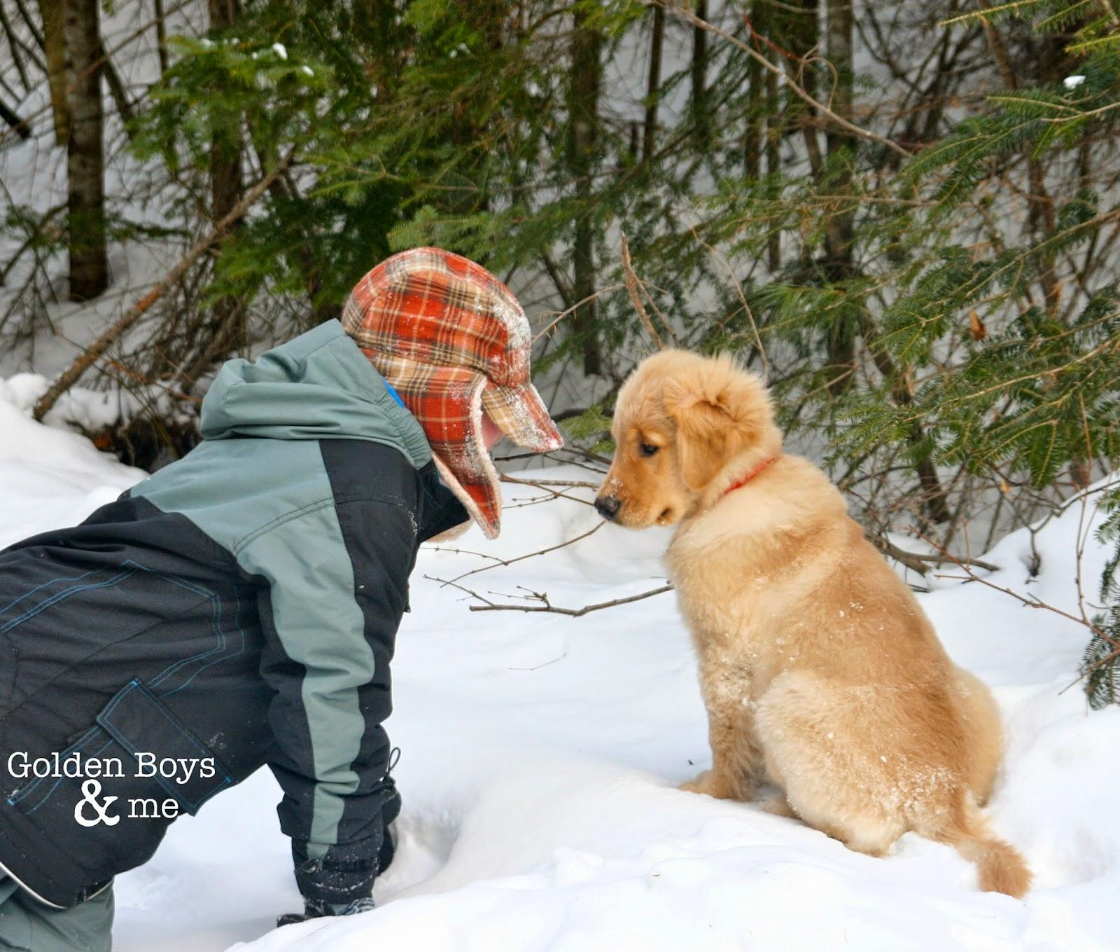 Golden Retriever puppy in snow with boy-www.goldenboysandme.com