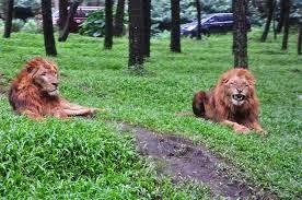 http://www.wisatabromotourmurah.com
