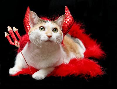 cat halloween photos