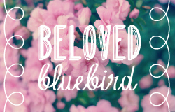 Beloved Bluebird