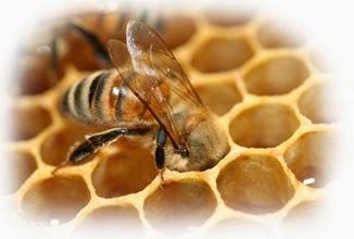 royal jelly jeli raja jeli ratu lebah madu kelulut dalam krim herba kemboja produk kosmetik krim malam sabun muka