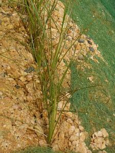 Matojos anti erosion