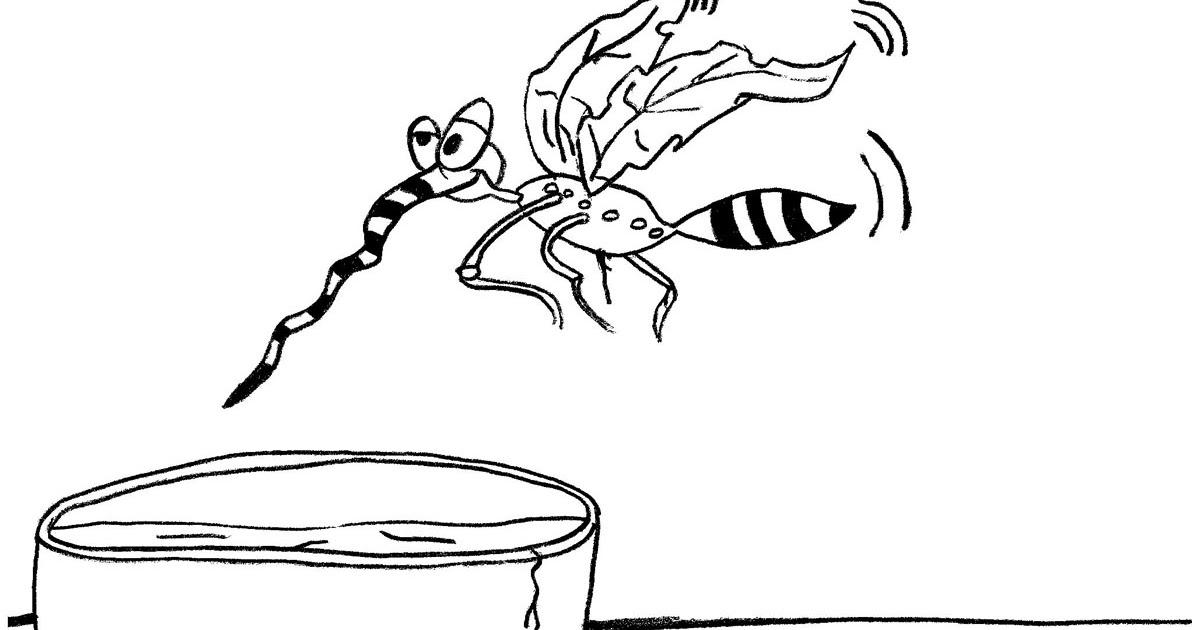 desenho de mosquito da dengue para colorir desenhos diversos para