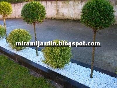 Mira mi jard n plantas topiarias for Jardines pequenos decorados con piedras