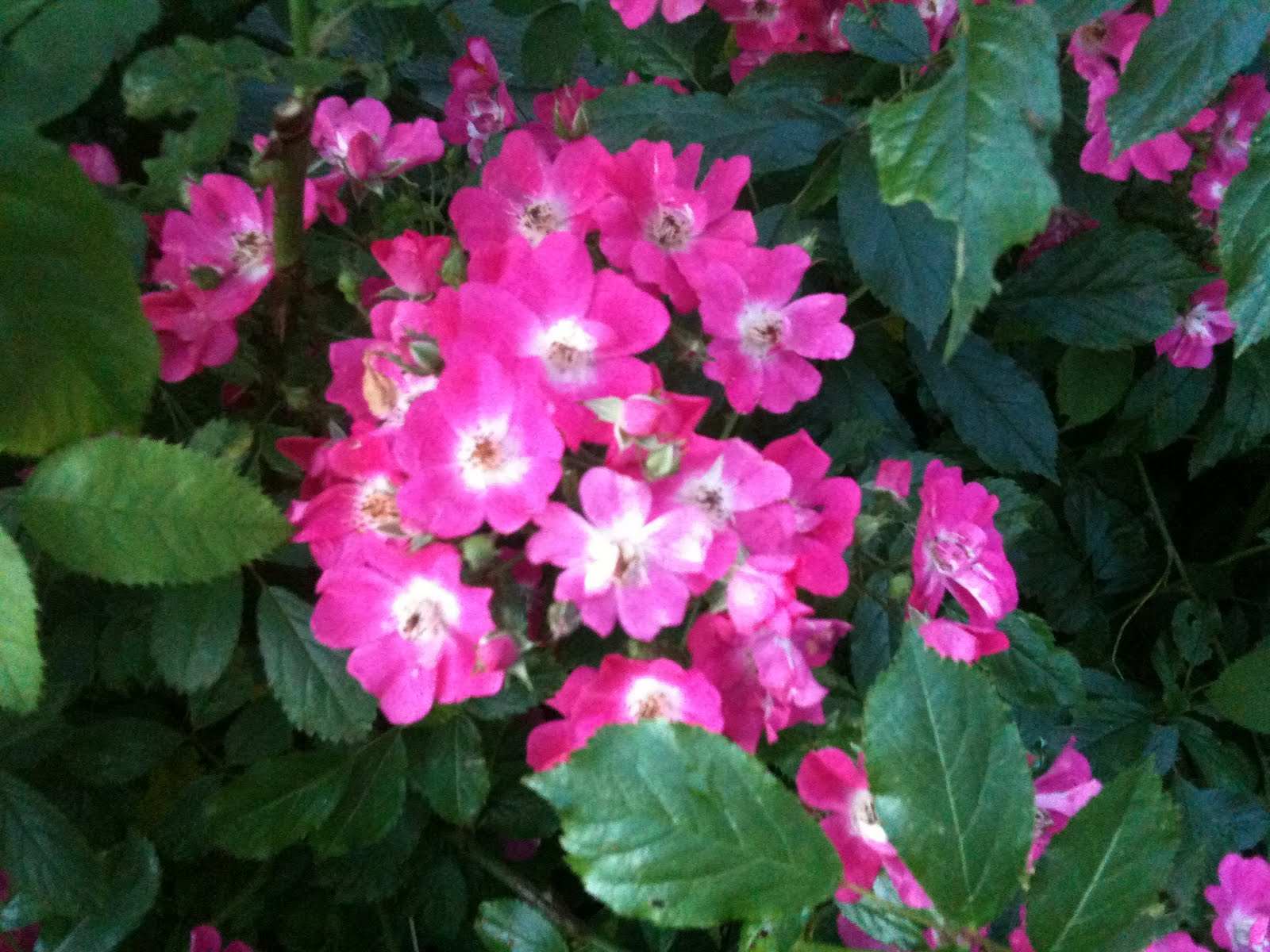 Trädgårdsdags: juli 2012