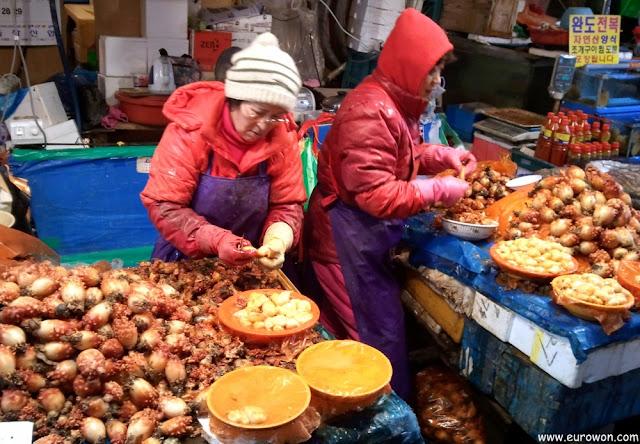 Coreanas pelando mongae (urocordado)