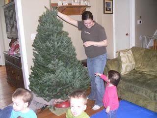 Setting up a live Christmas Tree