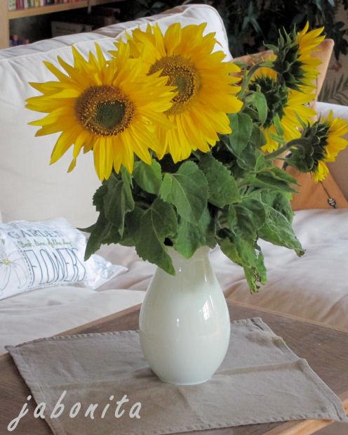 Sonnenblumen frisch vom Feld