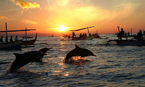 Sunset With Dolphin In Lovina Beach
