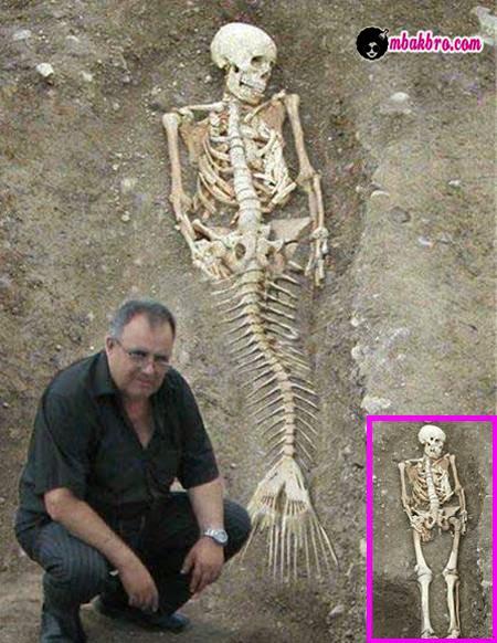 tulang putri duyung apa ikan mujair?