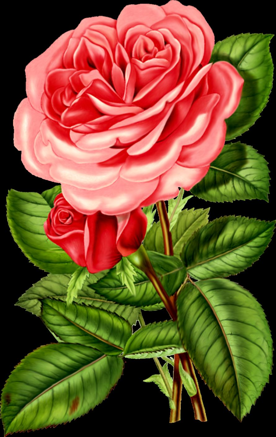 Victorian Rose Clipart   Clipart Kid