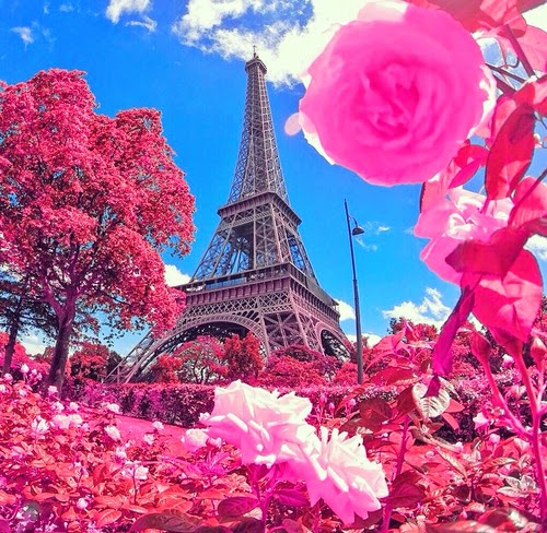 imagens Fofinhas florzinha rosas