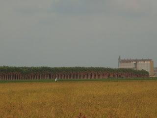 Trees in the horizon - Sant Carles de la Rápita