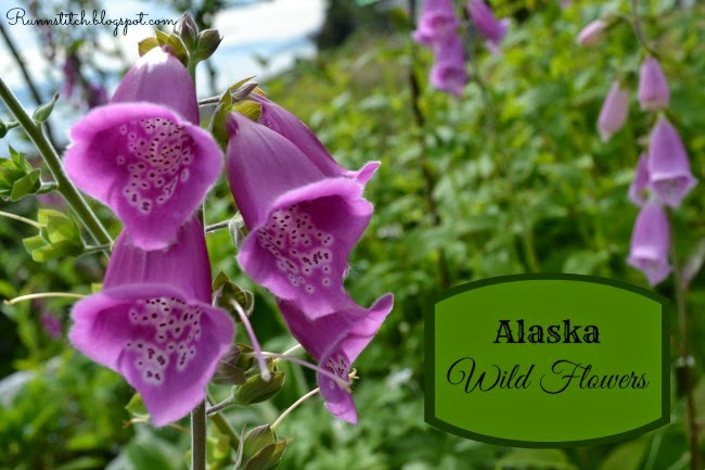 Alaska Is Blessed With Beautiful Colors In The Summer