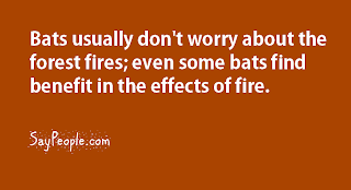 bats and forest fires