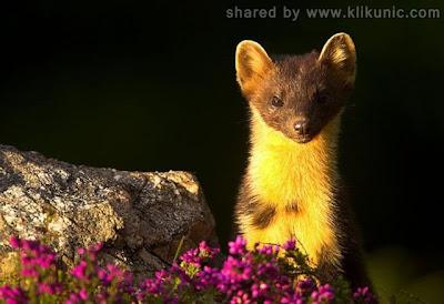 http://3.bp.blogspot.com/-4dvs3Q1Hdqg/TXzEnD_4ynI/AAAAAAAARD4/-9YzjpG2J2c/s1600/these_funny_animals_635_640_17.jpg