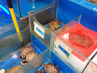 Live and dead turtles and toads in store in Shanghai