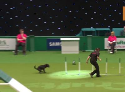 Campeonato de cachorros engraçado
