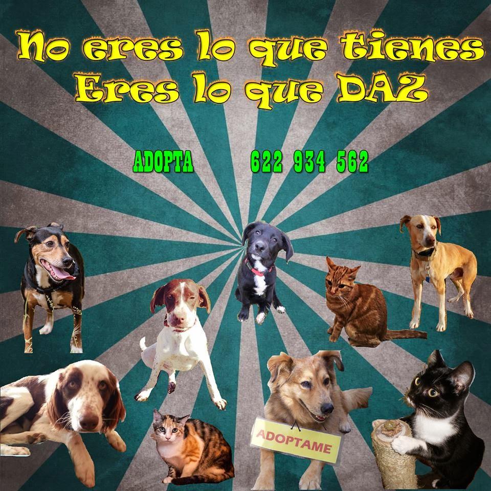 http://defensanimalzamora.blogspot.com.es/