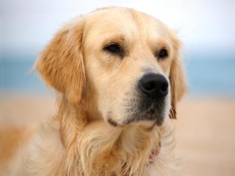 La Verdad del Perro