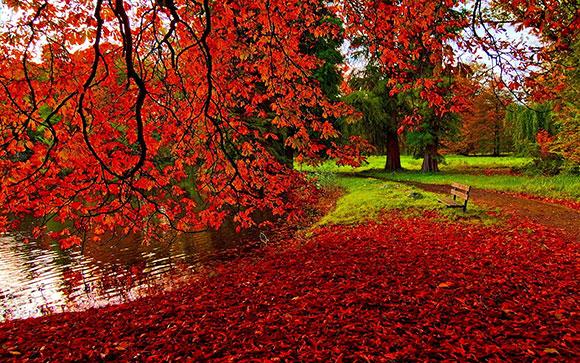 خلفيات مناظر طبيعيه , حديقة الخريف