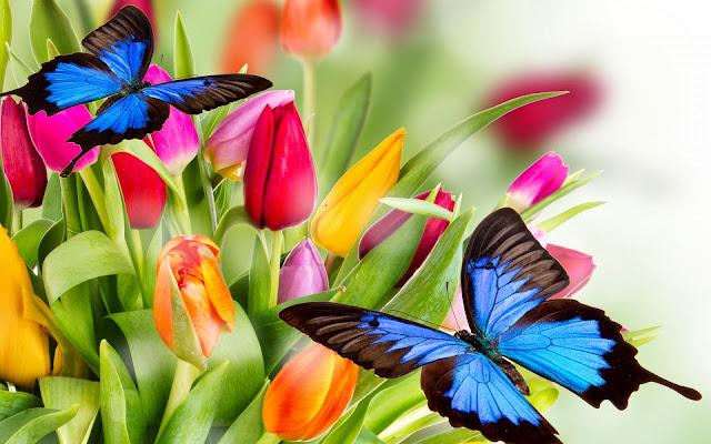 Mariposas Azules y Flores de Colores