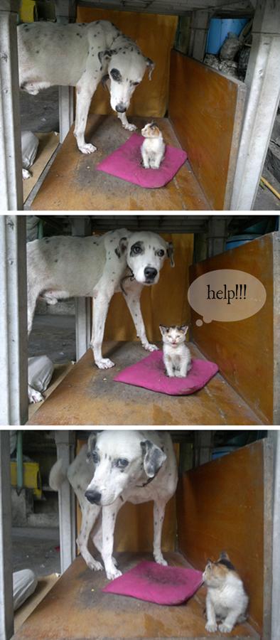 cat, dog, pets