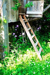 Hos fiffiga Hillevi hittar du fler trädgårdsbloggar indelade efter zoner