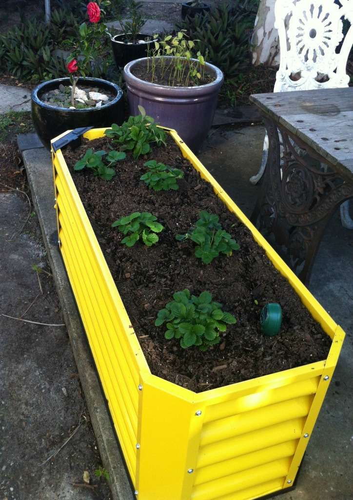 Hills Self Watering Garden Bed Review And Giveaway Mrs Bc 39 S House Of Chaos