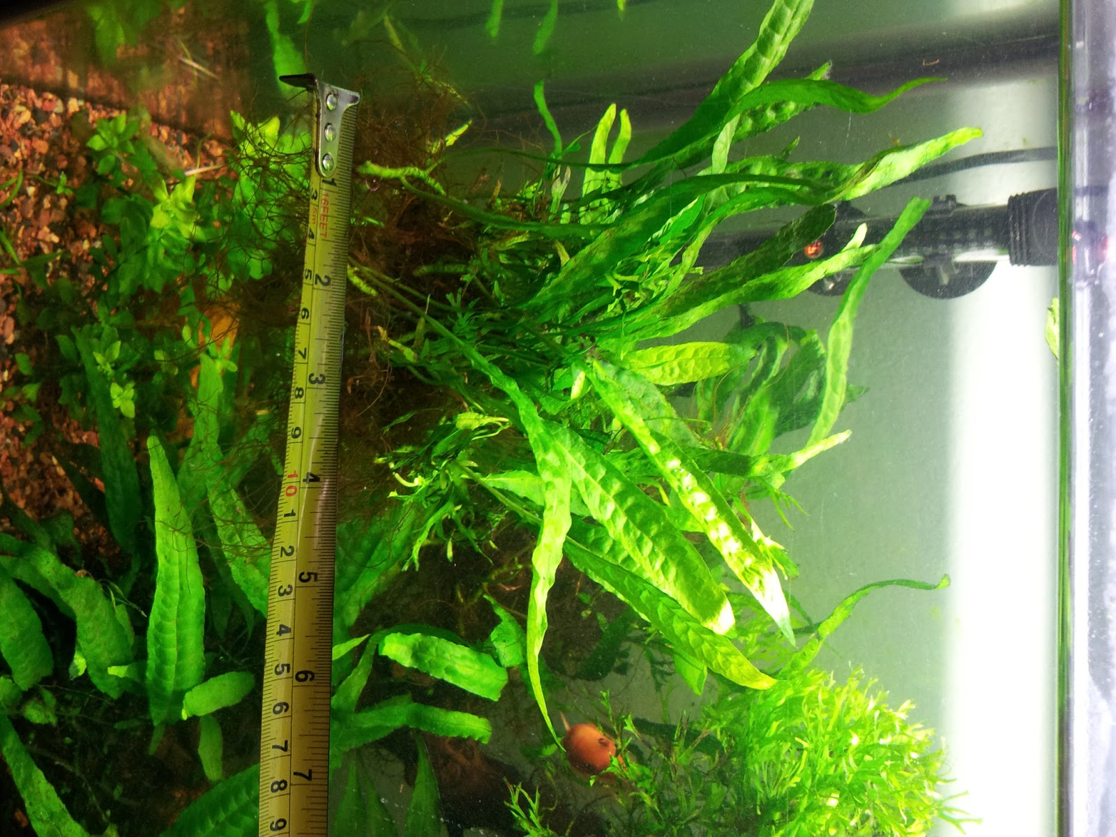 Plants for sale aquadic for Plants for sale