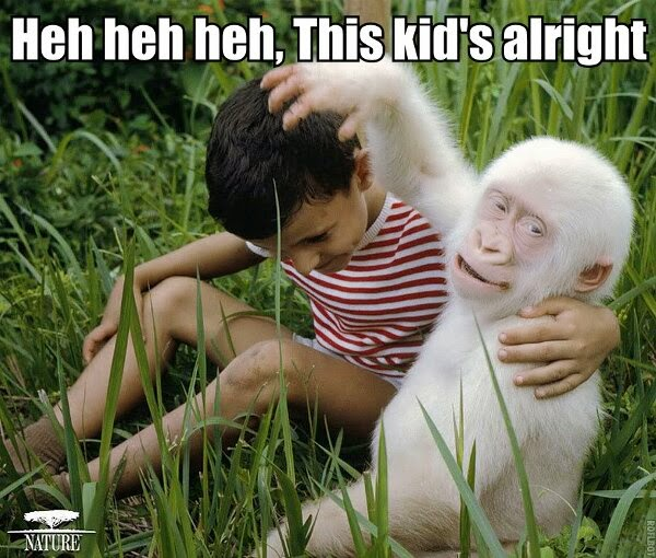 30 Funny animal captions - part 21 (30 pics), captioned animal pictures, albino gorilla