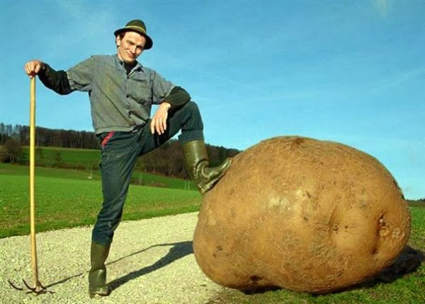 Анал фото овощи гиганты130