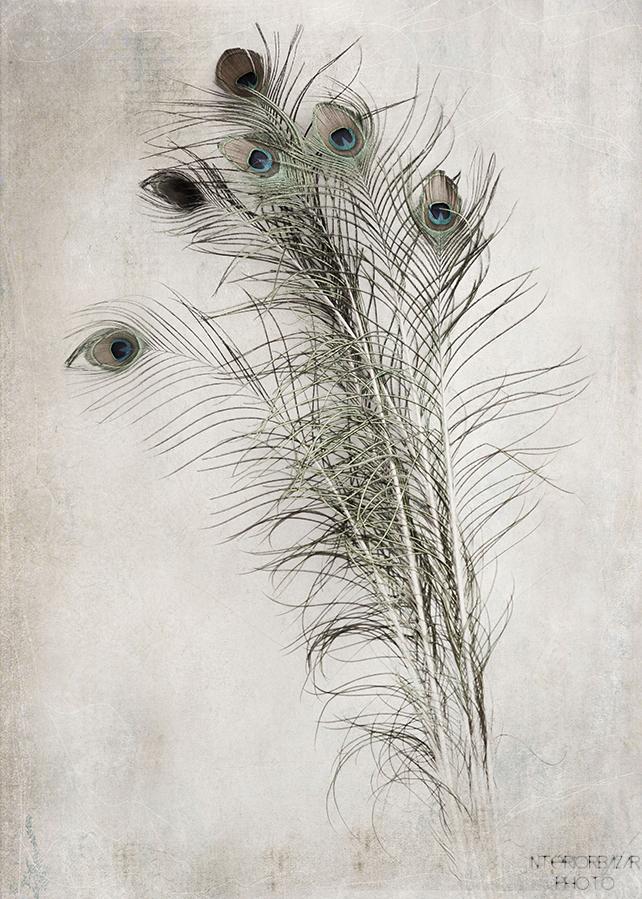http://interiorbazarfoto.bigcartel.com/product/peacock-feathers