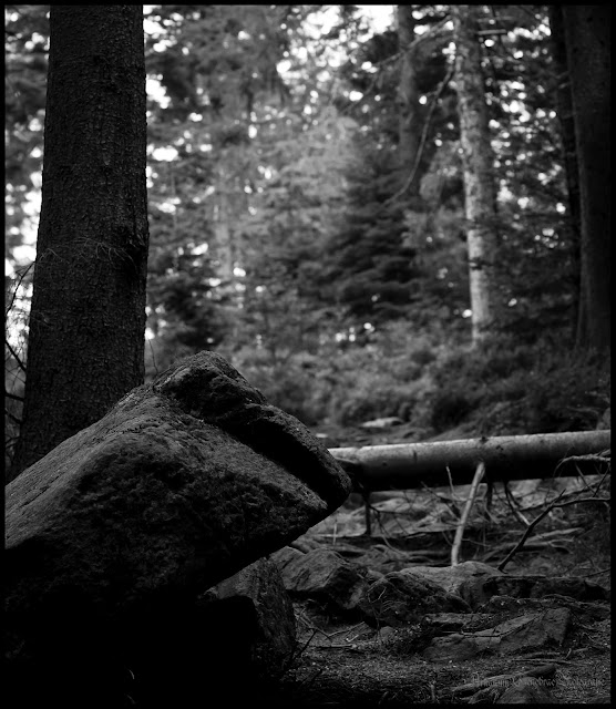 Kaltenbronn Wald