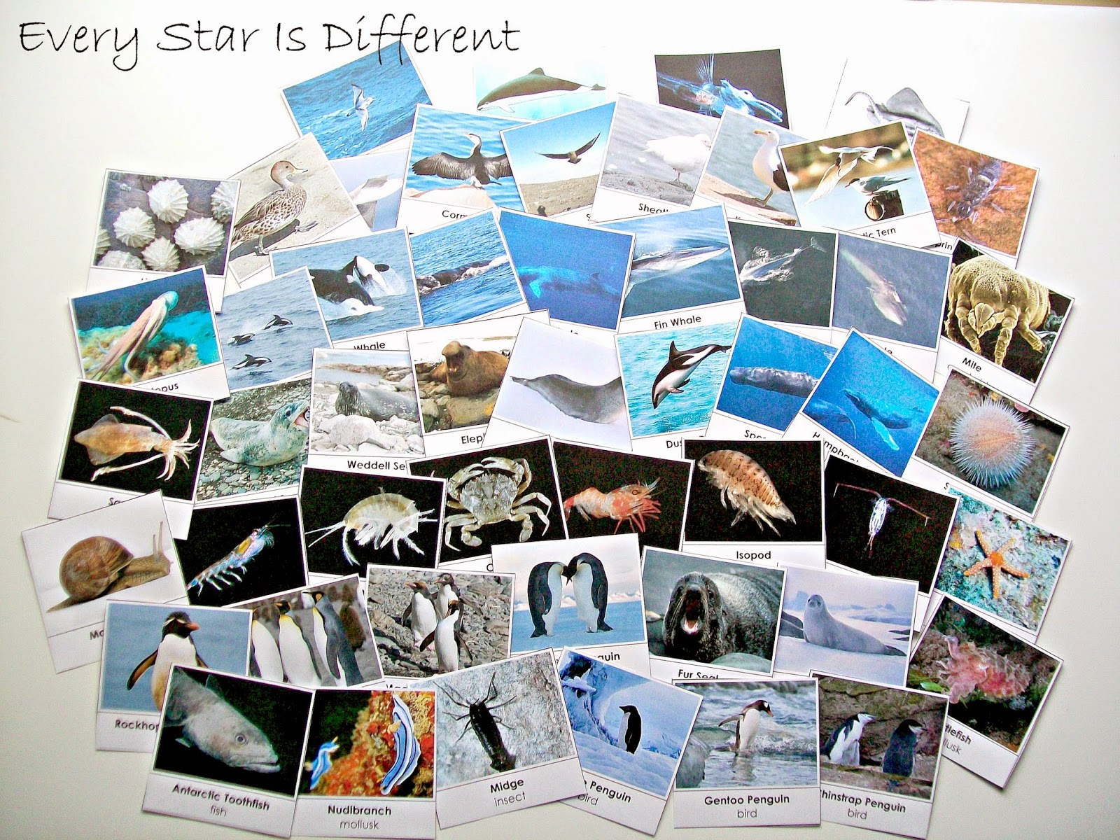antarctica unit w free printables every star is different