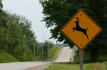 Tips for Driving During Deer Season