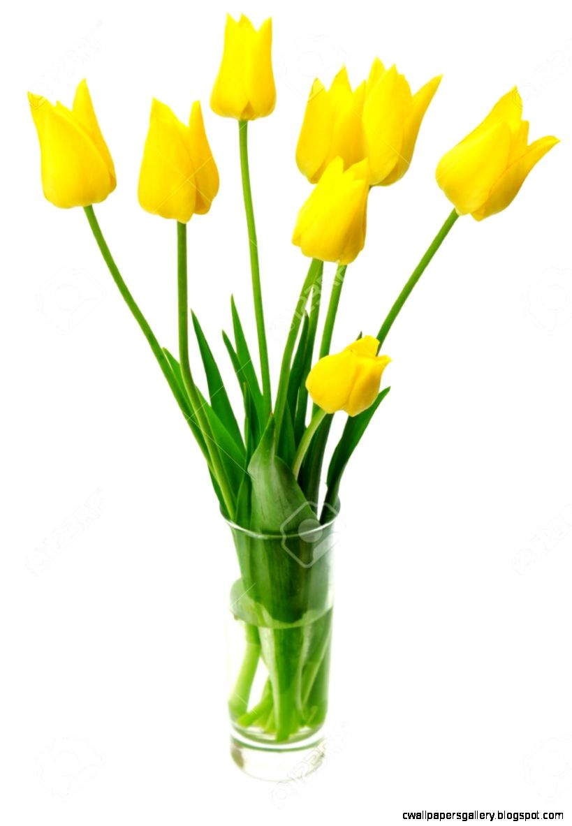 Bouquet Of Yellow Tulips In A Vase Isolated On White Background