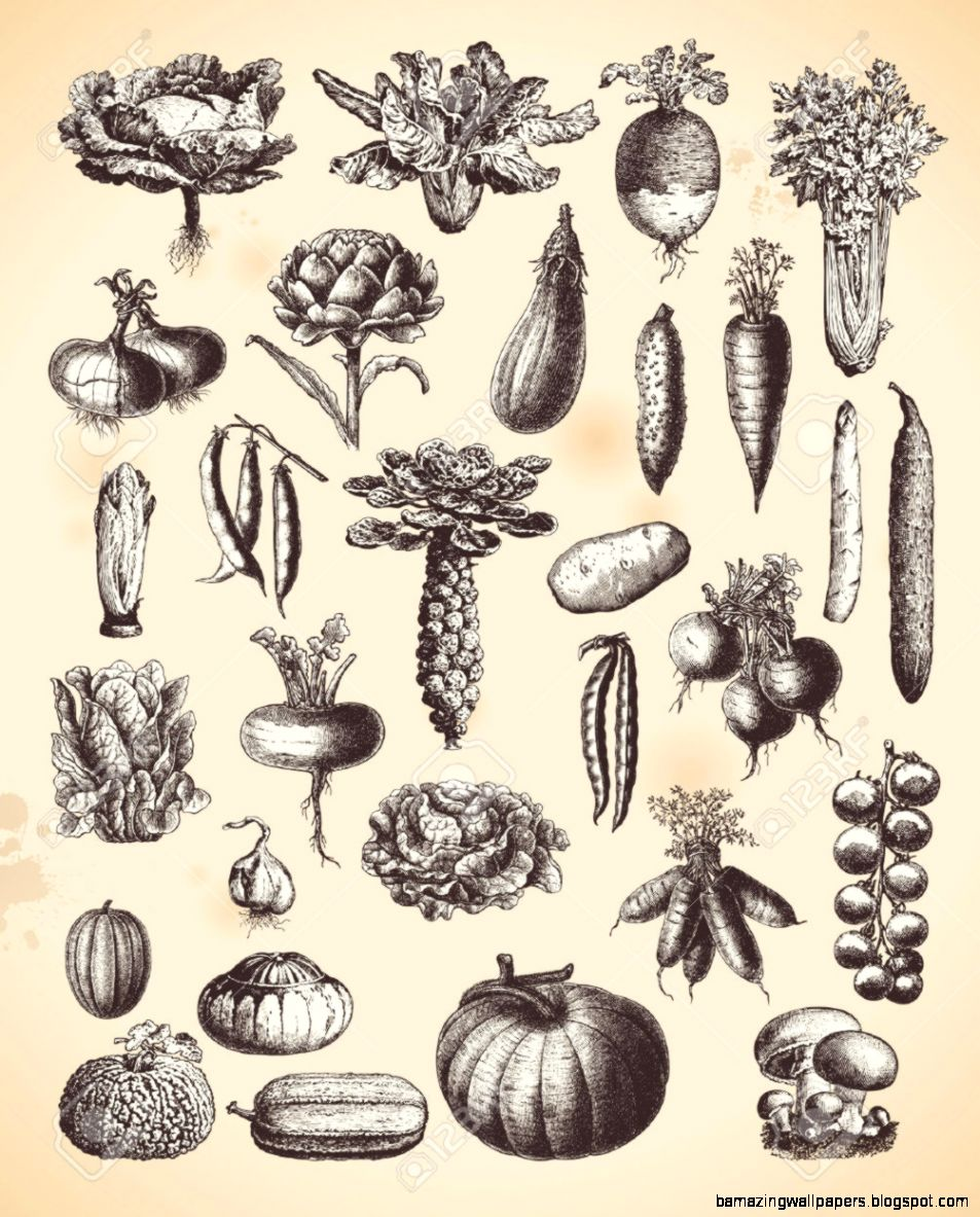 Large Collection Of Vintage Vegetable Illustrations Royalty Free