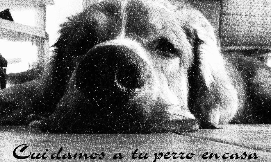 Cuidamos de tu perro en casa