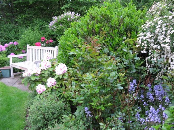 blomstrende buske i maj