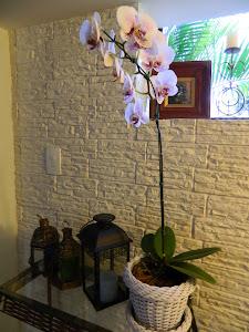 Amo orquídeas