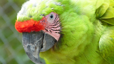 macaws Nicaragua