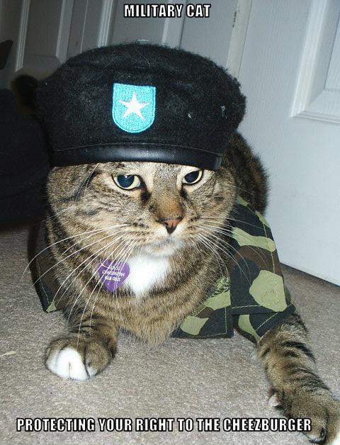 military_cat.jpg